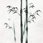 KJ-0013  静かな竹道