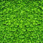 KP-0022  Green Leaf Wall