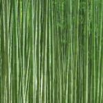 竹林壁紙 和モダン 竹の壁紙 青竹 bamboo wallpaper