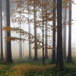 KP-0048  霧がかる森の香
