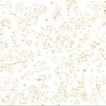 KF-0014  Astronomical -アストロノミカル-