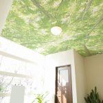 木漏れ日の壁紙
