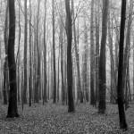 KP-0056  落葉の森