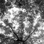緑の木と森の壁紙