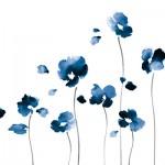 KN-0058  i fiori