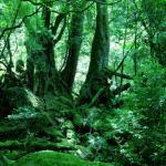 木と森の壁紙