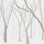 KN-0070   独りの森