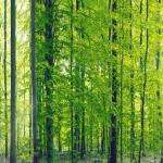 森の壁紙で目を休める