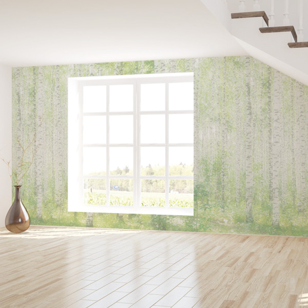 白樺の壁紙 森の壁紙