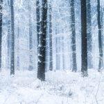 雪の降る森の壁紙