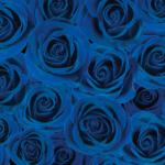 青いバラの壁紙