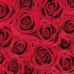 赤いバラの壁紙