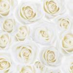 白いバラの壁紙