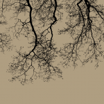 木の壁紙や植物の壁紙