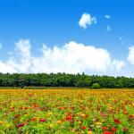 花畑の壁紙