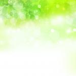 KN-0105   きらめきの新緑