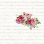 KN-0123   薔薇と白い壁