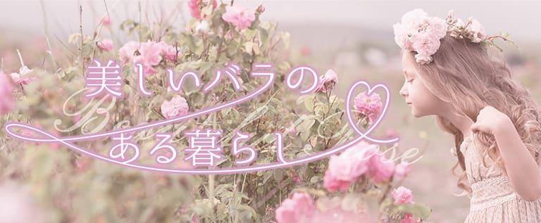 rose_mini
