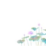 KJ-0163 蓮花の水
