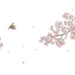 KN-0134 桜の枝